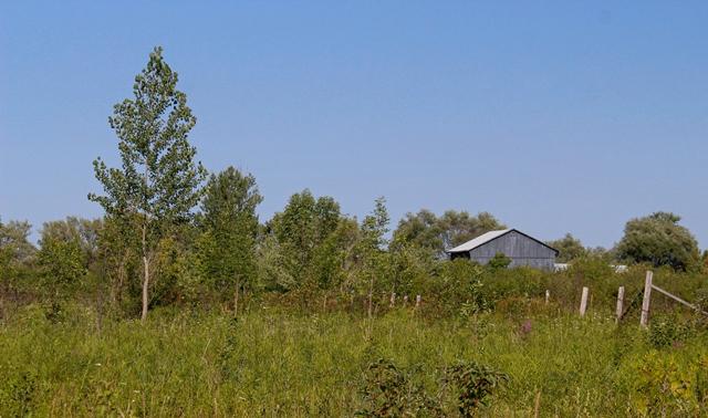 Phyllis Rawlinson Park Barn in the Field