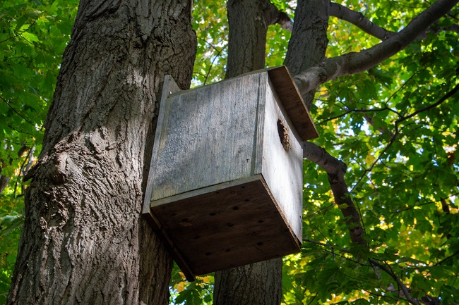 Beaver Woodland birdbox