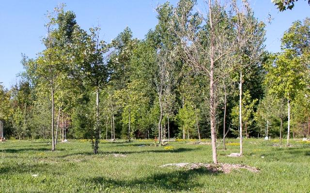Phyllis Rawlinson Park Celebration Forest