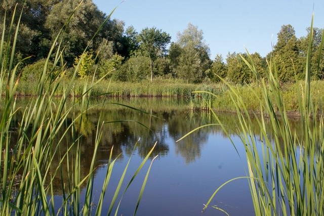 Phyllis Rawlinson Park Pond