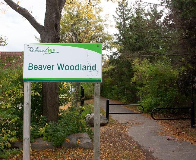 Beaver Woodland