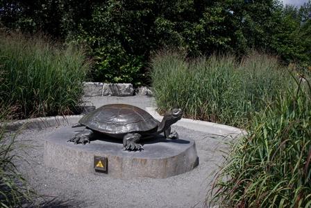 Turtle Sculpture Lake Wilcox Park